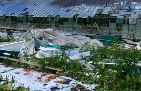 A glasshouse in Motueka was ripped apart by a twister, which also dislodged the support posts in an old wooden glasshouse.