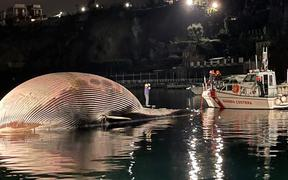 A photo taken overnight and handout on January 20, 2021 by the Italian Coast Guards (Guardia Costiera) shows the carcass of a huge dead whale (L) in the port of the Sorrento, south of Naples, as it's being towed away by the Italian Coast Guards towards the port of Naples,