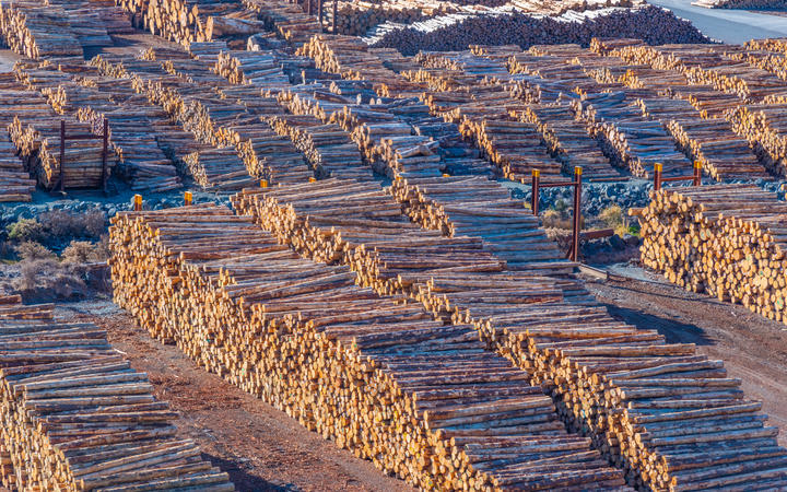 Wooden logs stored at port of Picton, New Zealand.