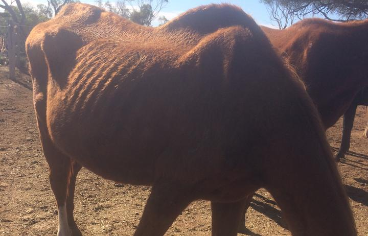 Indigo Violet was found to be 140kg underweight at the Baroota property, according to a veterinary report.