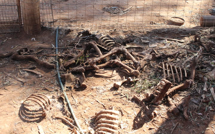 Piles of rotten bones were found after an inspection of a Baroota property in South Australia, where puppy farmer Dora Ryan kept animals.