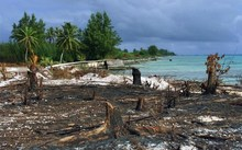 Photo taken 06 June 2000 of part of the atoll of Mururoa, four years after the cessation of French nuclear testing. Almost all the installations that sheltered up to 3,000 people for 30 years have been dismantled , giving the natural vegetation a chance to grow again.