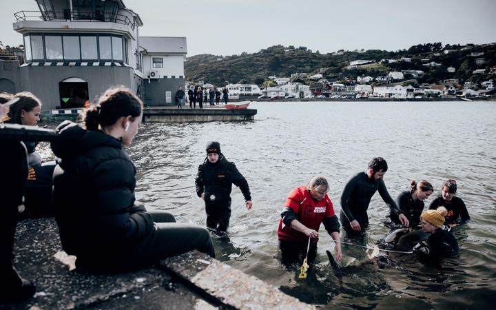 Rescuers and volunteers keep watch over a stranded baby orca at Plimmerton, Wellington.