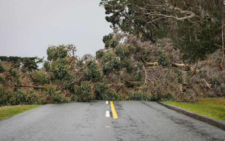 Strong winds knocked down trees in the Glentoi area of Canterbury.  Birch Hill RD, Glentoi.