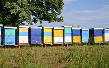 Beehives on farmland