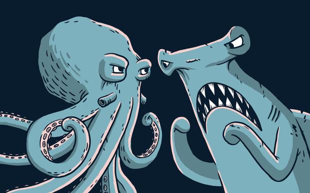 Octopus vs Shark | RNZ