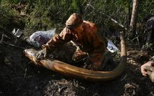 Mammoth tusk prospector an image from Amos Chapple's photo essay