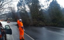 Strong winds have toppled a tree onto the road at The Gardens Corner, Dunedin.