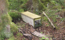 Stoat and rat trap on the Kepler Track