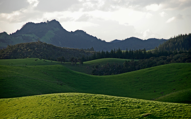 Rolling hills in the Northland region, New Zealand.