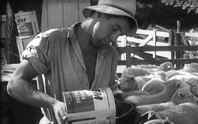 Working on the farm in 1956