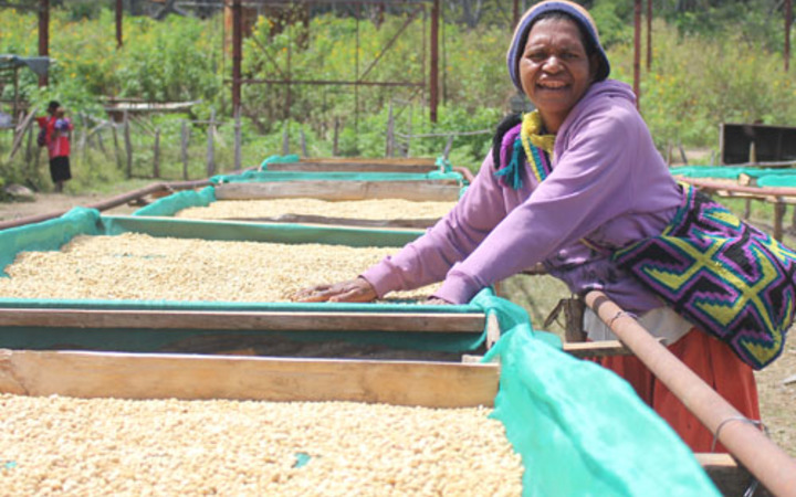 A woman sun drying coffee in Sakanuga village, Unggai Bena district of Eastern Highlands Province, PNG.