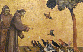 St Francis addressing the birds - Giotto.