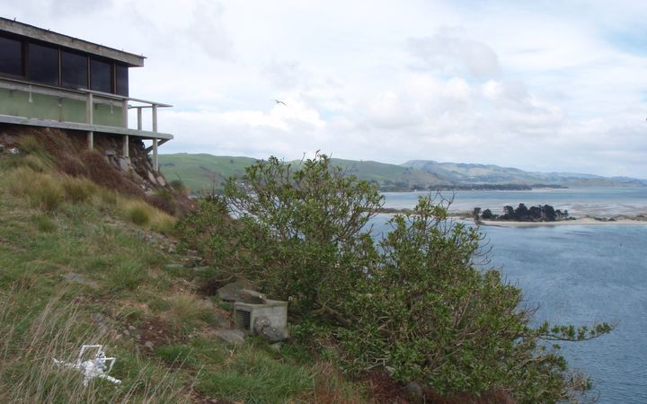 A crashed drone was found within the albatross colony at Pukekura/Taiaroa Head on Otago Peninsula.