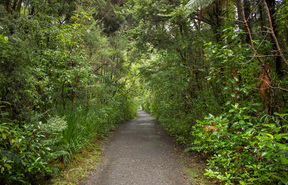 A walking track in the Waipoua Forest.