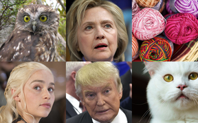 How to avoid the ongoing battle for the White House between Hillary Clinton, top middle, and Donald Trump, bottom middle? From top left clockwise, vote in a bird election, take up knitting, check out the web's plethora of cat videos or binge watch Game of Thrones.