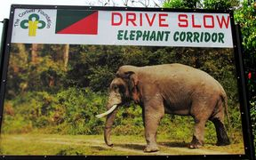 A road sign in India that Drive Slow Elephant Corridor, bearing a picture of an elephant