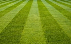 Stripes on the lawn
