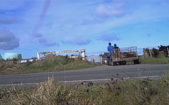 Farmwatch's latest investigation involves about 10 farms in Taranaki and Waikato, from August this year.