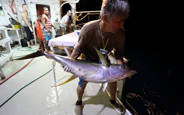 Release of a yellowfin tuna tagged with an archival tag.