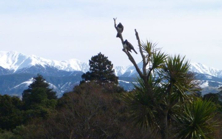 Snow on the Ruahine Ranges in Hawke's Bay.