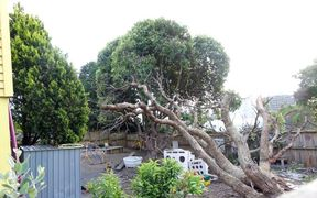 The fallen tree at Discoveries Educare