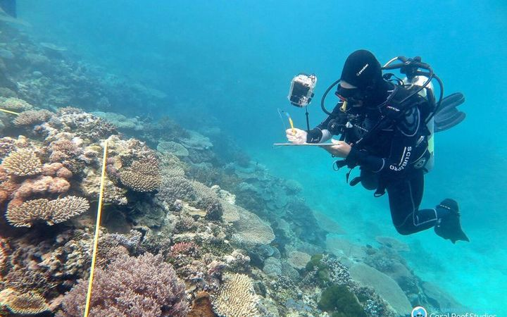 Researcher Grace Frank completing bleaching surveys along a 