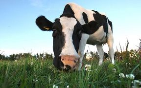 Dairy output cements rising reliance on  Chinese imports