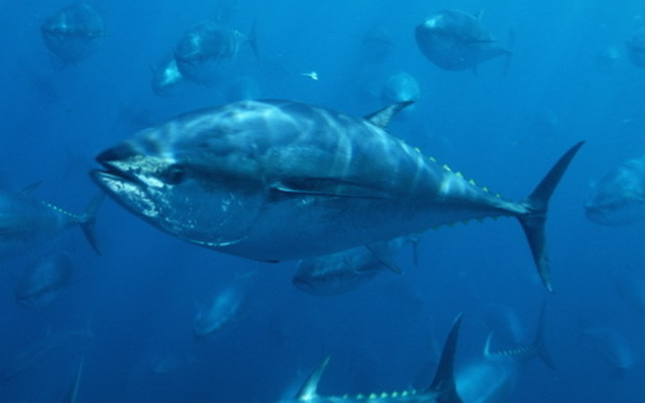 Bluefin tuna recreational catch limit imposed for first time