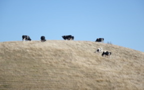 cattle hill