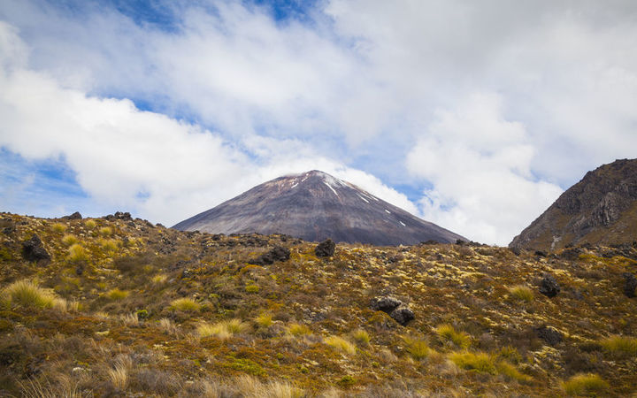 Britons hurt in bus crash in New Zealand's Tongariro Forest Park