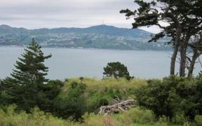 The view of Wellington Harbour from Watts Peninsula.
