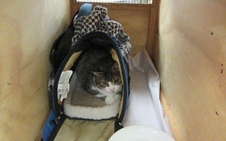 Canadian cat smuggler sent home class=