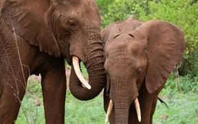 A pair of African elephants in the Manyara National Park in Tanzania (file)