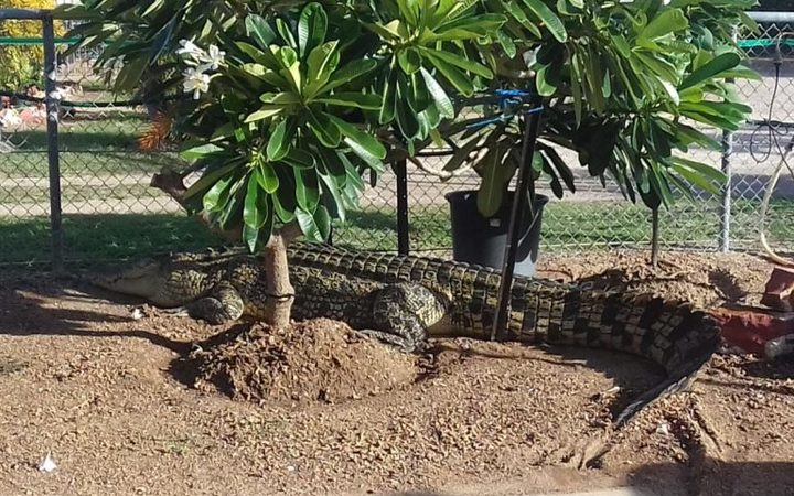 A stray 3.8m crocodile was found basking in the sun in Karumba, Queensland, early on 31 December 2016.