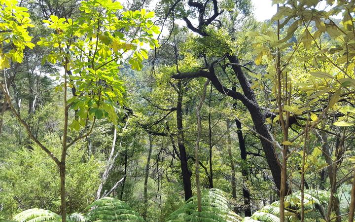 Abel Tasman native bush.