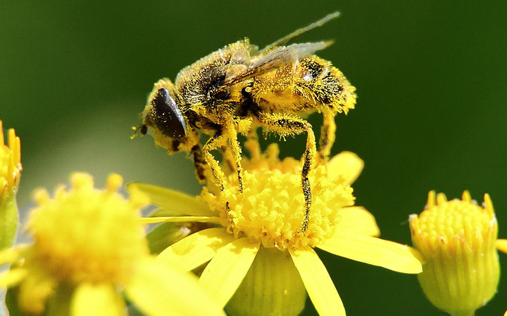 [no caption]
