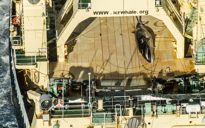 Dead whale caught in Australian waters on board Japanese whaler