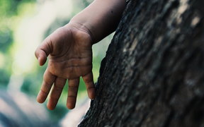child's hand touches tree trunk