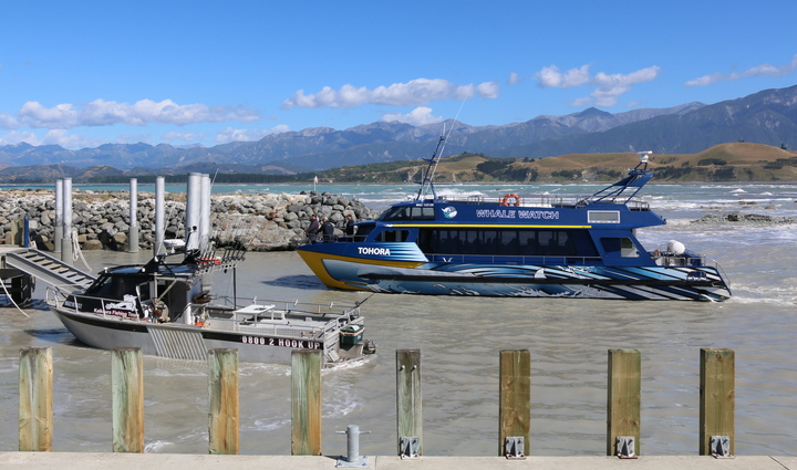 Whale Watch and Kaikoura Fishing Tours at the South Bay marina on 20 January 2017.