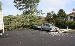High winds brought down trees and power lines in Mt Eden.
