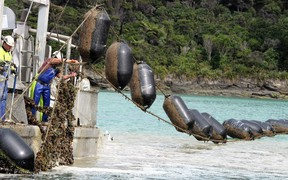 A mussel farm. The aquaculture industry is hoping to develop offshore marine farms.