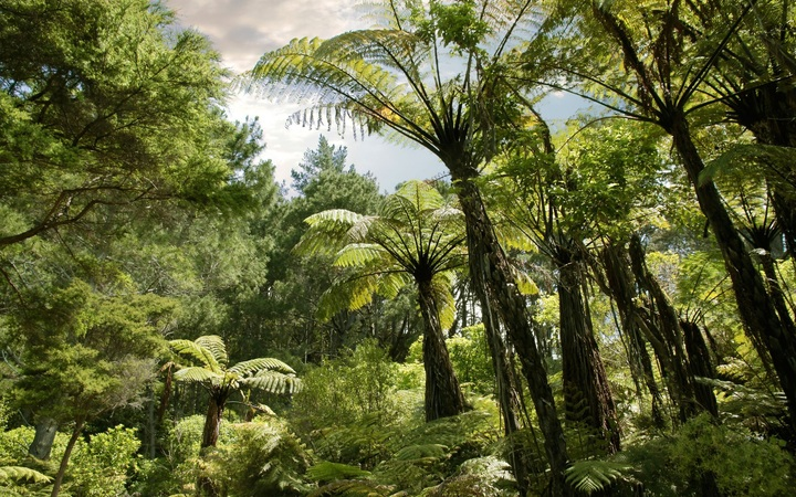 Forest near Hahei, Coromandel Peninsula, New Zealand