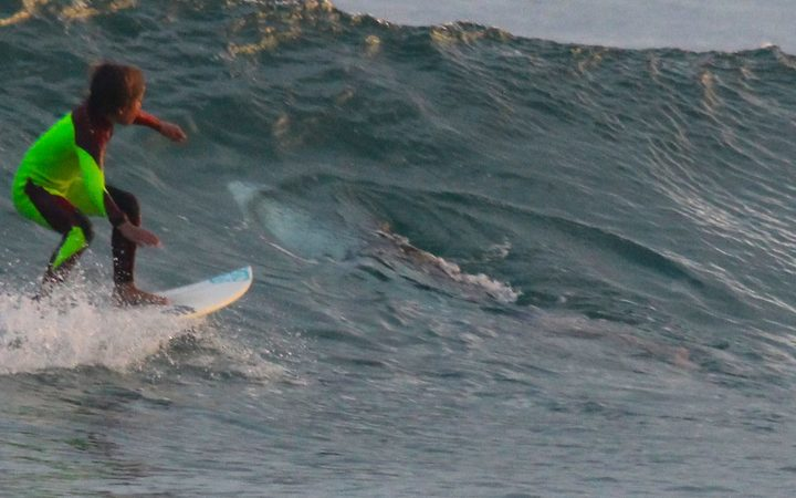 10-year-old surfer rides over great white