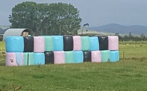 Multi coloured silage bales