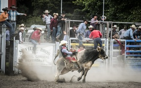 Bull riding at the Warkworth Rodeo.