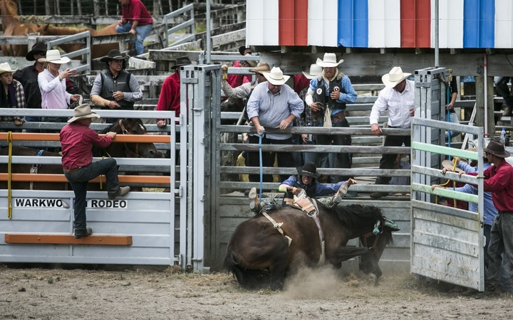 A horse goes down at the Warkworth Rodeo.