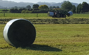 Silage making summer