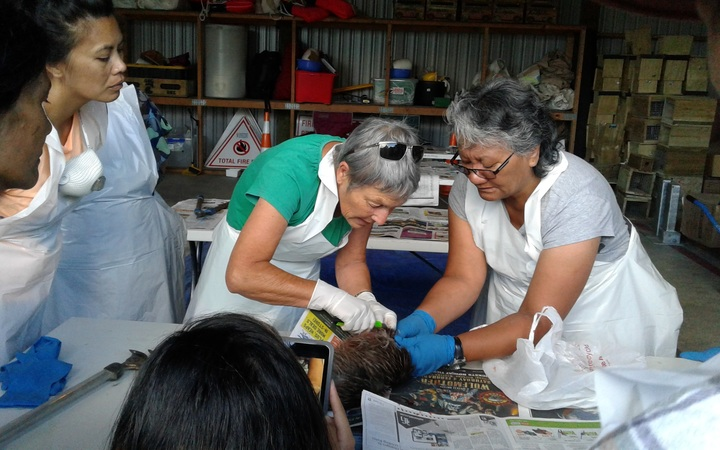 Hapu members at a workshop in Northland watch as a dead kiwi's pelt is removed.