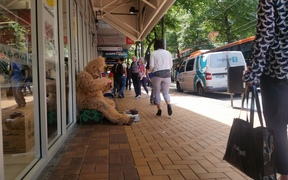 A person dressed as a gorilla begging in Wellington.